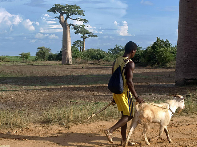 PB255268ac Man Going Back Home with his Goat