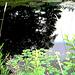 Half moon state park. Sur la 4 près de la 30 nord. Vermont, USA /  États-Unis -   26 juillet  2009 - Postérisation