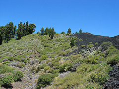 die Natur erobert ihr Terrain zurück- auf der routa de los vulcanos