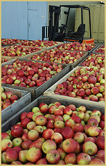 Obst Sammel- und Verteilstelle