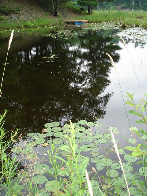Half moon state park. Sur la 4 près de la 30 nord. Vermont, USA /  États-Unis -   26 juillet  2009 Photo originale
