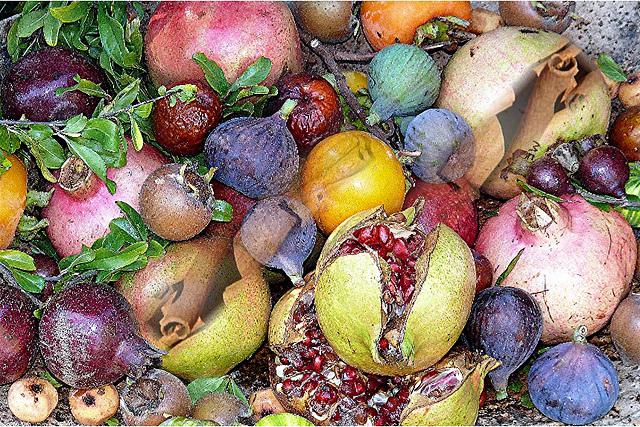 Fruit d'arrière saison