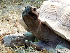 """Schildkröte: """"Na und, was guckst Du so..."""" ©UdoSm"""