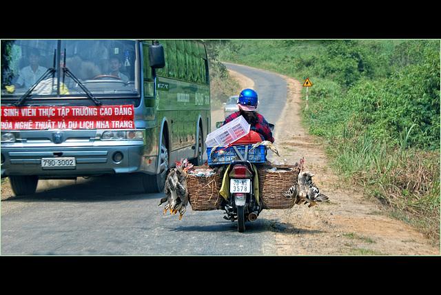 goose traffic