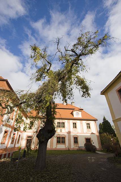 Kloster Marienthal   Baum