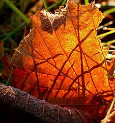 Ombres d'herbes sur feuille d'automne