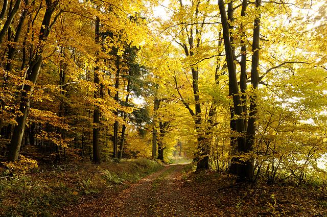 Herbstspaziergang im Odenwald bei Bremhof