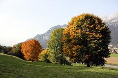 Herbstaugenweide