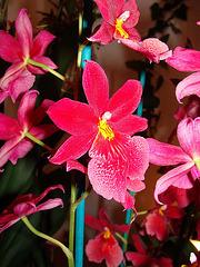 Orchidée exotique