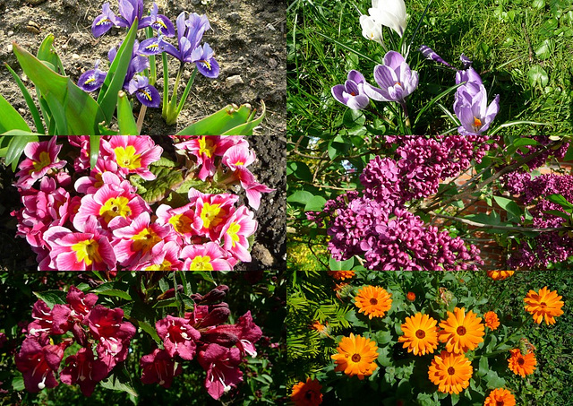 Frühling - Sommer