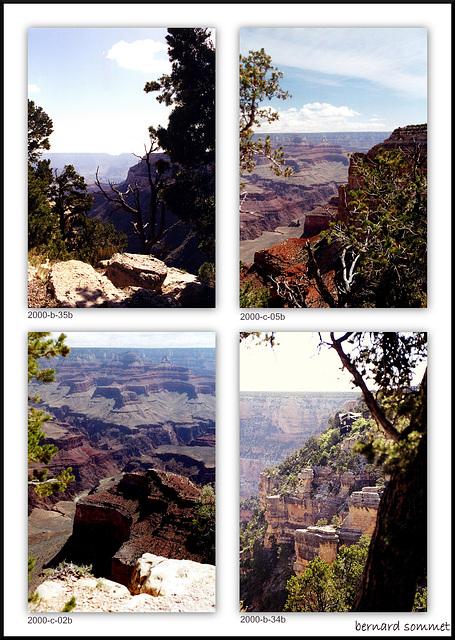 Après les cactus de Phoenix et Sedona on arrive au Grand Canyon