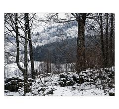 blanc : première neige dans les Vosges