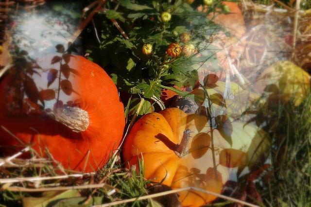 En prépa d'Halloween