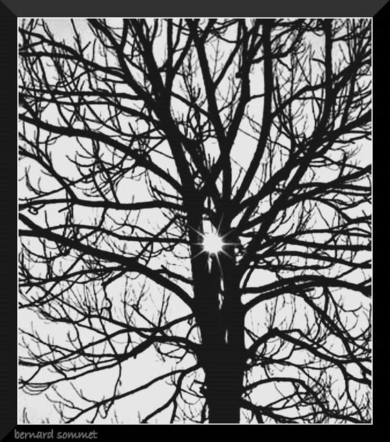 Pris dans les filets de l'arbre
