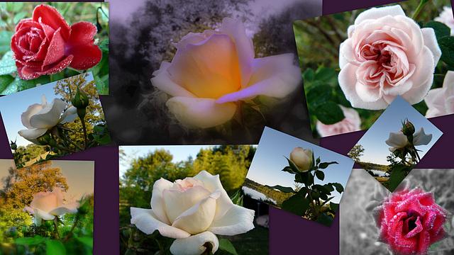 fleurs iper