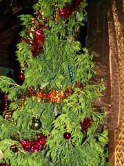 Mauritianischer Weihnachtsbaum