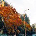 Fall Colors on Plickova, High-Saturation Version, Haje, Prague, CZ, 2009