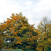 Greenish Fall Colors, Haje, Prague, CZ, 2009