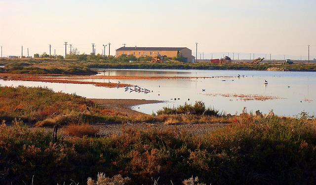 couleurs d'automne sur l'étang et ses salins