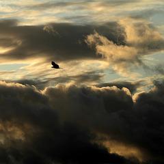 A bird flew by my window