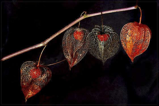 Amour eclat vos plus belles photos - Amour en cage comestible ...