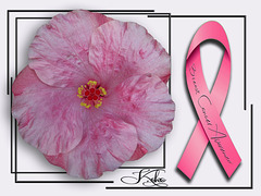 Pink tropical hibiscus, BCA ribbon