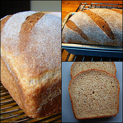All-Purpose Whole Wheat Bread