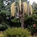 Al mi nekonata arbo - Mir unbekannter Baum