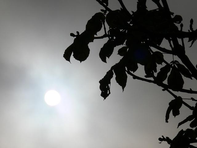 Vormittagssonne