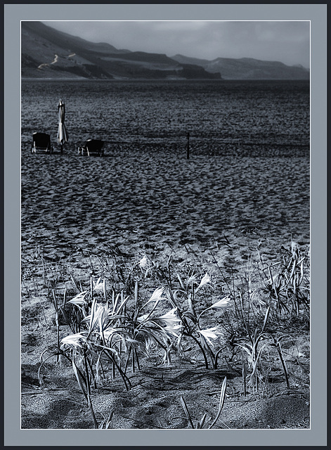 Lazy lilies on the beach
