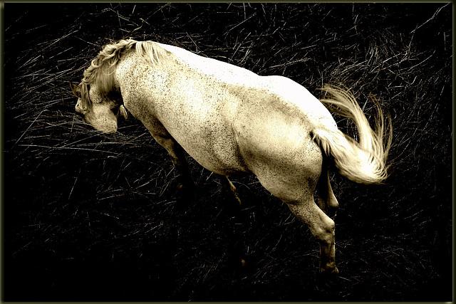 Traitement de cheval