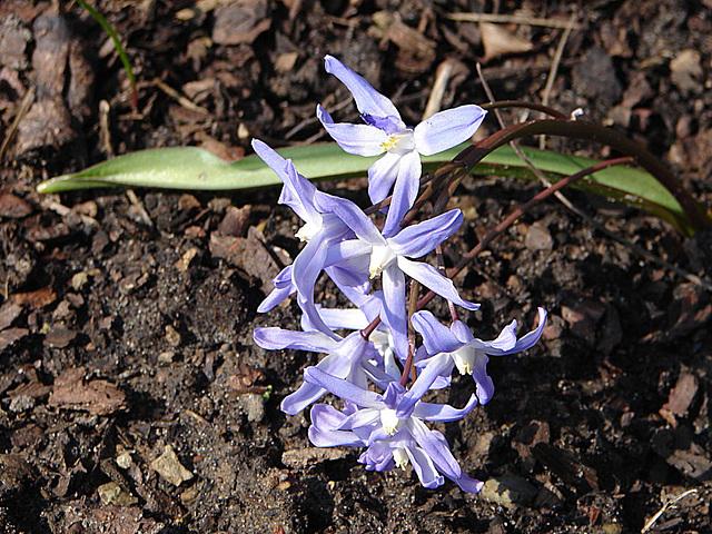 20090401 0008DSCw Blume
