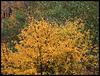 Herbst / autumn / fall / automne / el otoño / autunno / qiūlìng