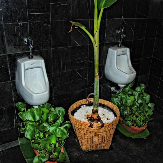 lotos everywhere