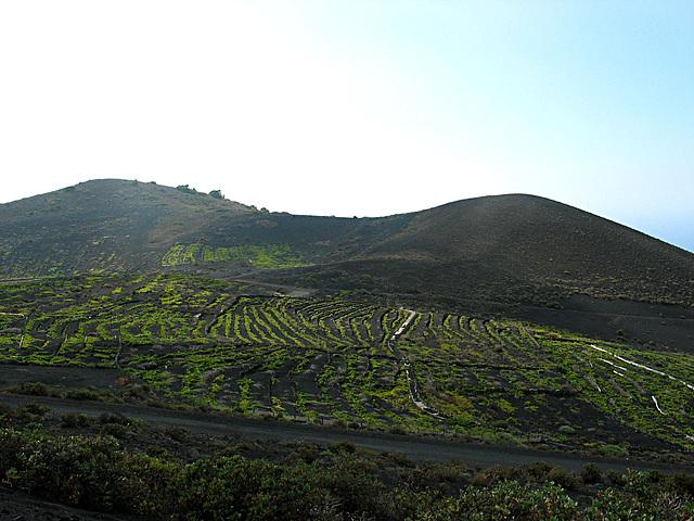 Weinanbau auf dem Vulkan