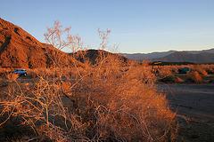 Borrego Palm Canyon Campground Morning (3165)
