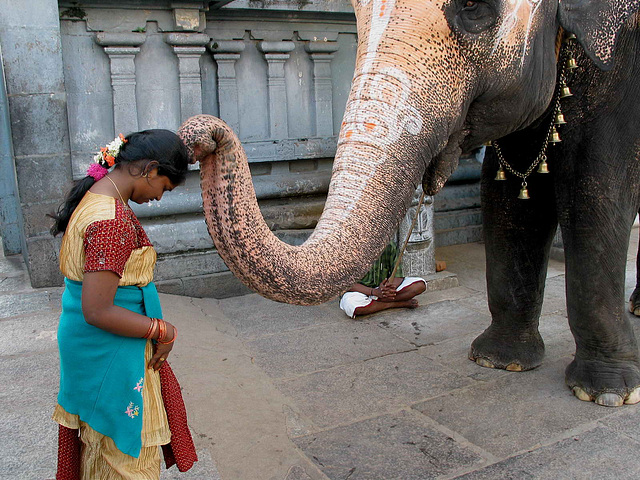 IMG 8612ac Ganesh Elephant's Blessing People at Temple Entry
