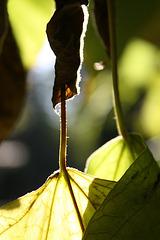 Durch die Blätter geschaut