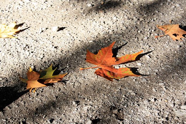 Und wieder fallen die Blätter