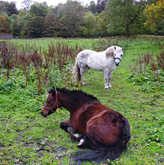 Equine friends.