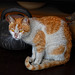 living cat statue