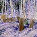 Hill crest cemetery - Négatif