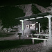 Borrego Palm Canyon Campground - IR (0032)