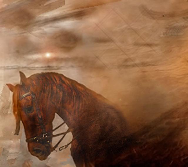 cheval et autres reves