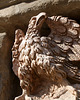 Stone Eagle