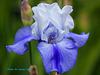 Iris Explore 305 copy