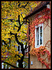 autumn in Graz
