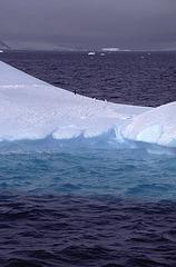 Adelie Penguins on ice flow