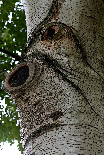 L'homme-arbre