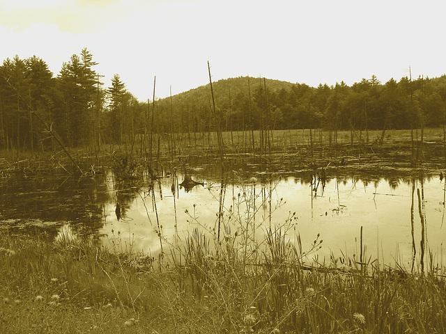 Écosystème avec quenouilles sur la 9 south entre Ausable & Lewis /  Vermont USA / États-Unis.  25 juillet 2009 -  Sepia
